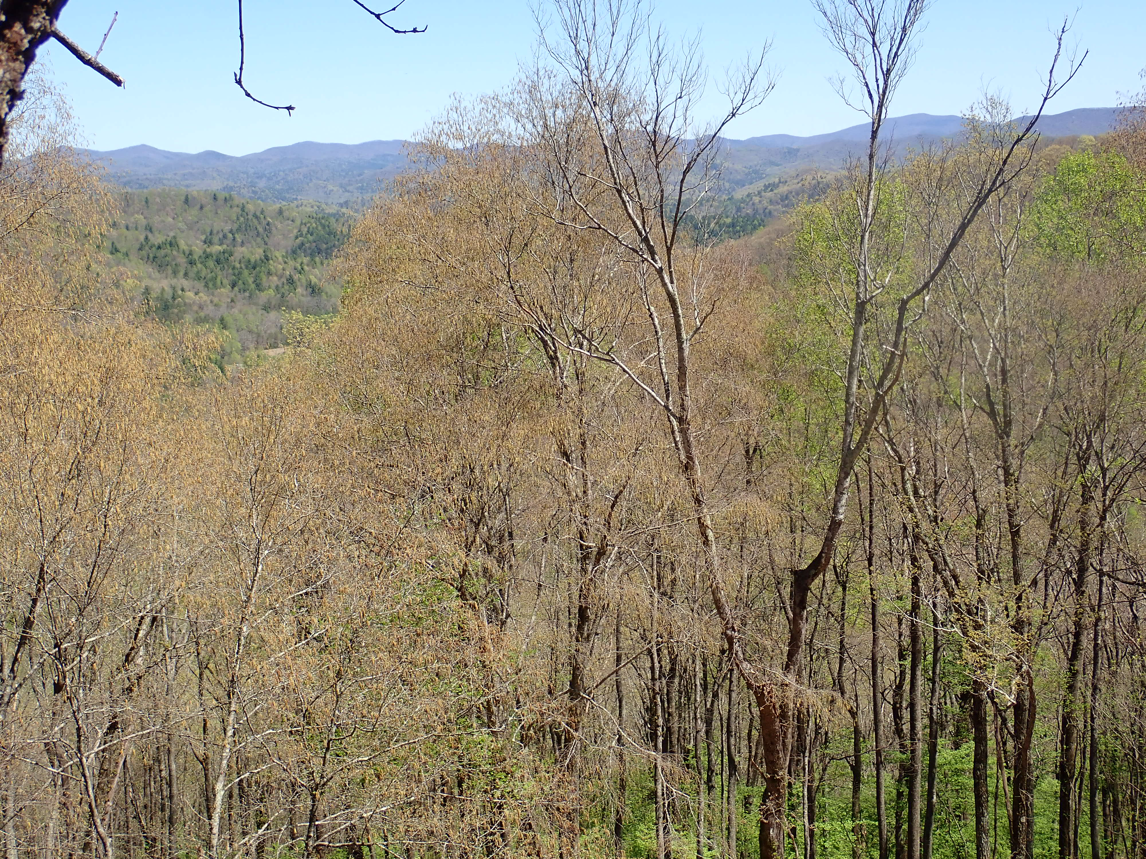 View from Duncan Ridge Rd